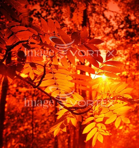 Nature / landscape royalty free stock image #161357128