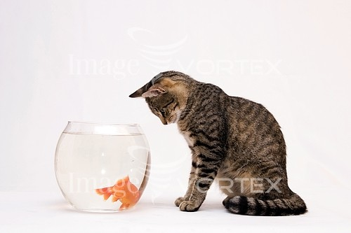 Pet / cat / dog royalty free stock image #185716299