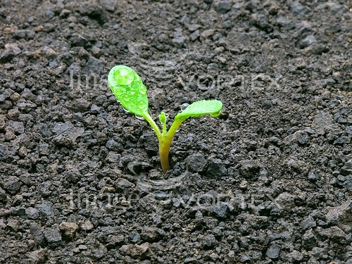 Industry / agriculture royalty free stock image #204609899