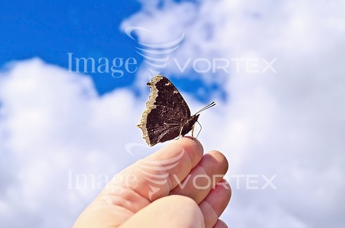 Animal / wildlife royalty free stock image #240792617