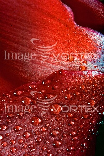 Background / texture royalty free stock image #285514779