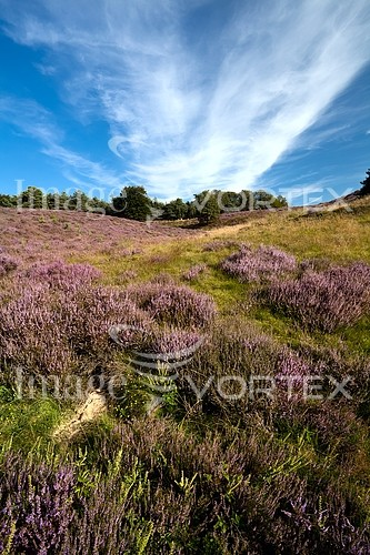 Nature / landscape royalty free stock image #394871638