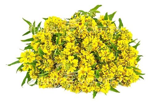 Flower royalty free stock image #429899702