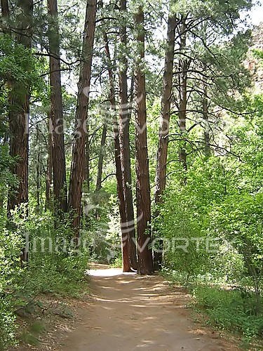Park / outdoor royalty free stock image #450653182