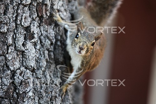 Animal / wildlife royalty free stock image #610745532