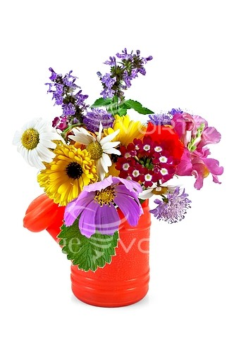 Flower royalty free stock image #637993214