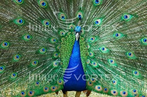 Bird royalty free stock image #744208512