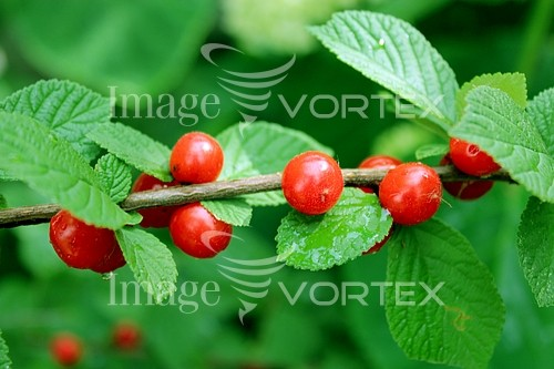 Industry / agriculture royalty free stock image #749223849