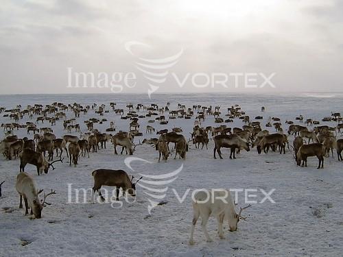 Animal / wildlife royalty free stock image #836316840