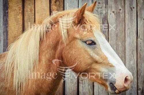 Animal / wildlife royalty free stock image #836314976