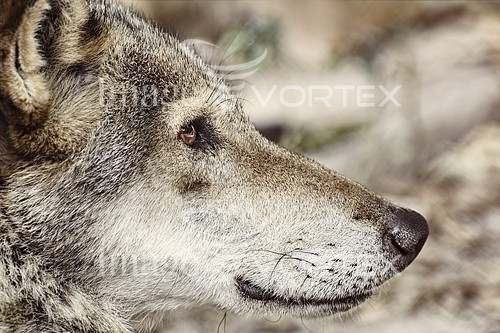 Animal / wildlife royalty free stock image #843218745