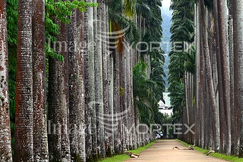 Park / outdoor royalty free stock image #882531460