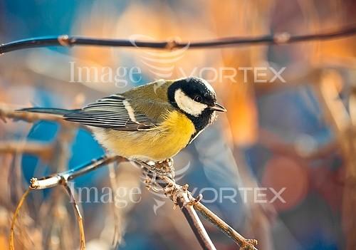 Bird royalty free stock image #905245751