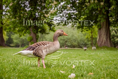 Bird royalty free stock image #907123788