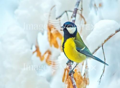 Bird royalty free stock image #925812202