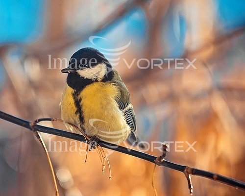 Bird royalty free stock image #928861547