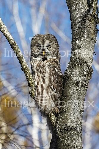Animal / wildlife royalty free stock image #931130042