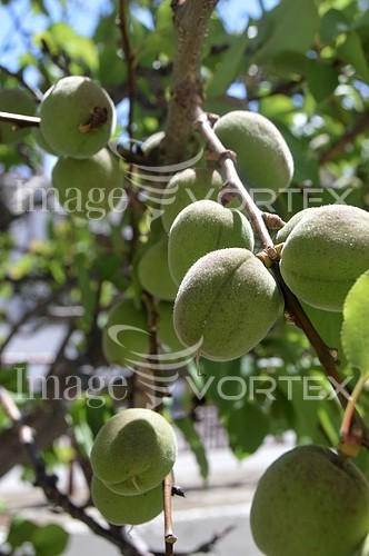 Food / drink royalty free stock image #976972125