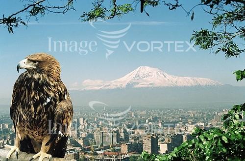 Animal / wildlife royalty free stock image #989084620