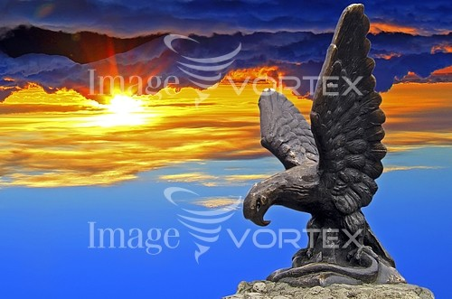 Animal / wildlife royalty free stock image #989055096