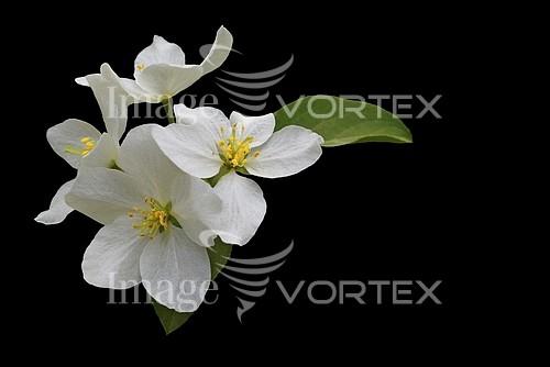 Flower royalty free stock image #992742154
