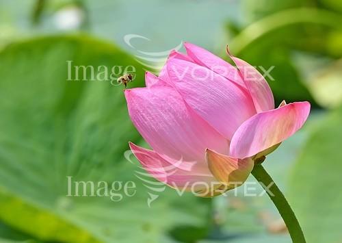 Flower royalty free stock image #993727728