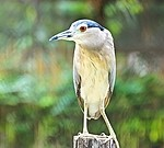 Bird royalty free stock image - click to enlarge